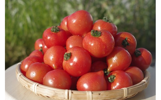 【A-063】期間限定 大切に育てたフルティカトマト1.2kg