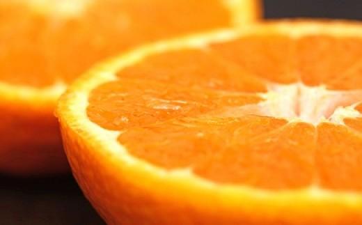 [№5803-0233]せとかオレンジ 約5kg