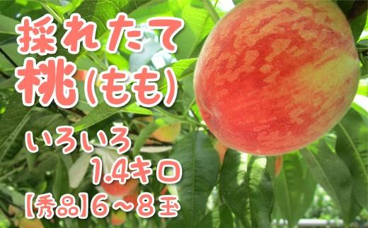 Z330 採れたて桃いろいろ1.4キロ【秀品】6~8玉【限定50名】