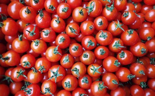 A007-03 ふぞろいミニトマト