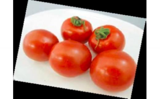 季節限定 JAなめがた「フルティカトマト」(250g×8パック)