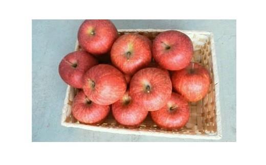 0056-103 家庭用リンゴ(サンふじ)10kg