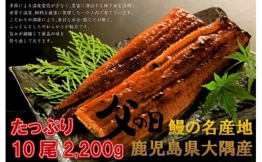 【I-370】大隅産うなぎの蒲焼 特大220g×10尾(有頭)父の日に!