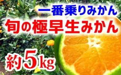 [№5745-0923]【極早生みかん】旬の極早生5kg