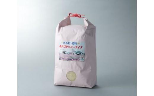 a6 ハニーライス白米  キヌヒカリ