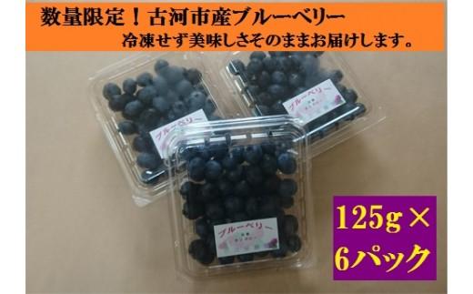 AS11_【7/22~7/28着日指定分】数量限定!古河市産のブルーベリー(125g×6パック)摘みたてを冷蔵でお届け!