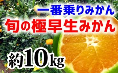 [№5745-0924]【極早生みかん】旬の極早生10kg