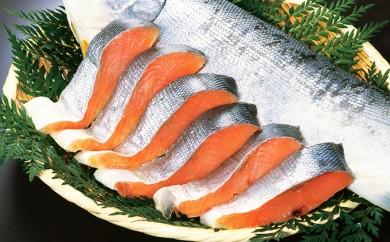 [№5901-0351]北海道礼文島前浜産 新巻鮭(切り身姿造り)1匹お届け!