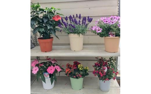 花の種類は季節によって異なります。