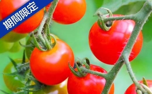 [B-25] 真っ赤なミニトマト(キャロル10)Lサイズ 3kg