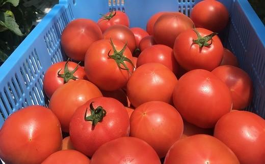 ふうちゃんのトマト詰め合わせ
