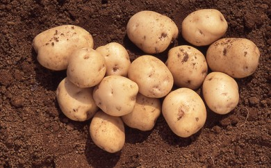 [№5786-1980]三方原馬鈴薯 L 約10kg※クレジット限定