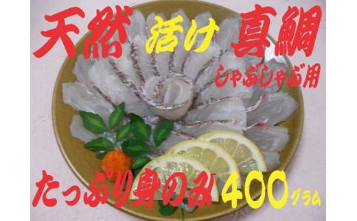 B659 泉佐野漁港直送 天然真鯛!しゃぶしゃぶ用