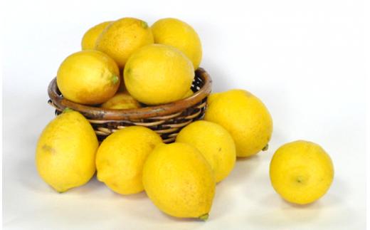 B-127  希少な国産レモン【宝韶寿レモン】訳アリ 約2kg(サイズ混合)