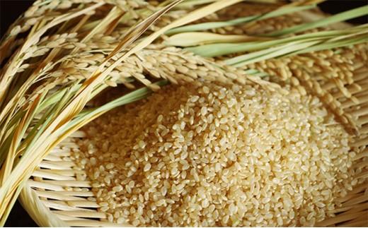 [№4631-1374]平成30年新米!! 高原さんの特別栽培米 福栄米 玄米10kg