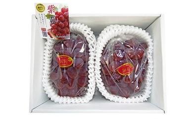 AY06 紫苑(しえん) 1.2kg