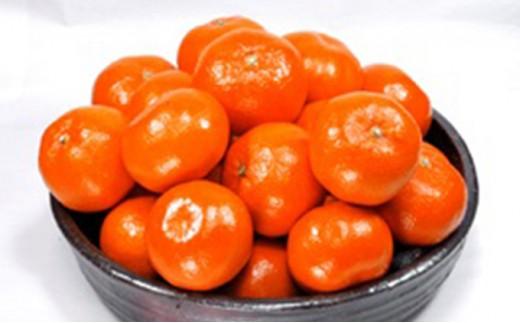 [№4631-1367]香川県オリジナル品種 「ハウスさぬき紅みかん」 2.5kg化粧箱入り