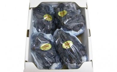 [№5911-0088]大粒で濃厚な甘み「ピオーネ」 約2kg