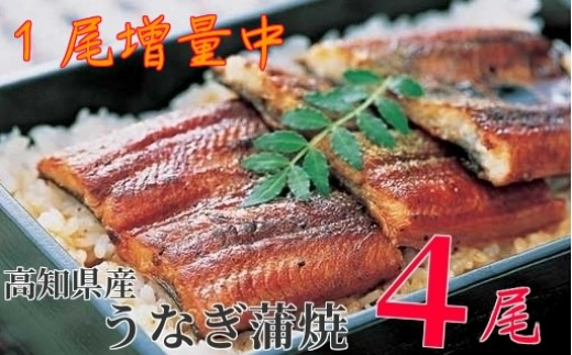 007-1.【5月限定】高知県産うなぎ蒲焼 長焼3尾+1尾 (無頭 計560g)