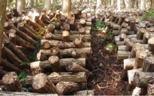 [№5884-0189]昔ながらのこだわりの原木栽培 生しいたけ