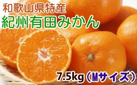 [№5745-0864]【厳選・産直】紀州有田みかん7.5kg(Mサイズ・赤秀)