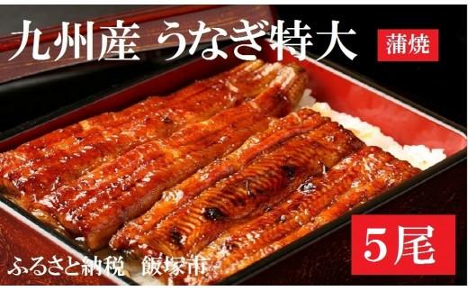 【B5-003】土用丑の日配送!魚市場厳選 九州産うなぎ蒲焼(特大サイズ5尾)<先行予約>