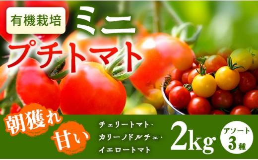 【A-372】朝獲れ!甘いミニプチトマトアソート(3種セット)