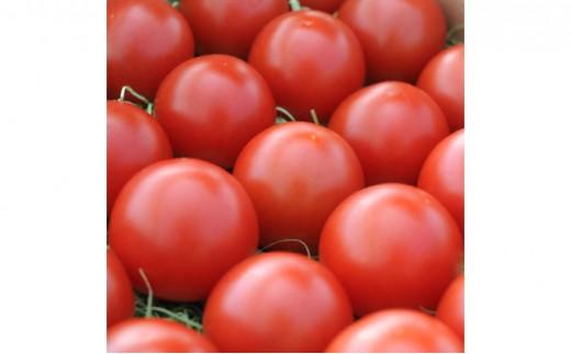 [№5890-0231]極甘フルーツトマト「ごくとま」ギフト1kg