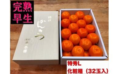 【完熟早生・有田みかん】化粧箱『特秀』Lサイズ32玉入