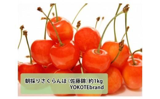 No.166 朝採りさくらんぼ(佐藤錦)約1kg YOKOTEbrand