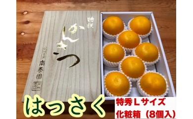 【化粧箱】手詰め八朔『特秀』Lサイズ8個入