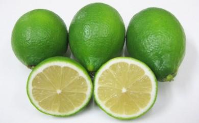 [№5668-0249]小豆島ハウスレモン 2kg