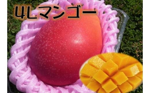 C115 甘さにびっくり!「特大4L完熟マンゴー」