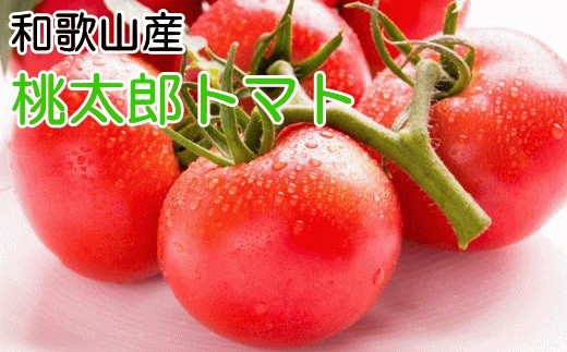 [№5745-0724]桃太郎トマト約4kg・M~2Lサイズ(18個~28個入り)