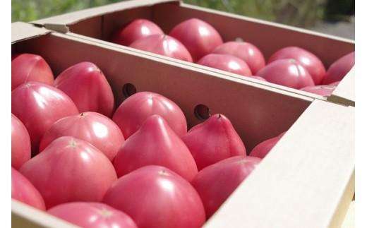 【A7-031】期間限定 真っ赤なトマトわけあり大容量6kg~7kg