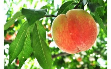 <甘い香りと果汁が自慢>桃 4kg(9~12玉)