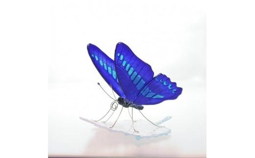 M0502ガラスの蝶 アオスジアゲハonリーフ