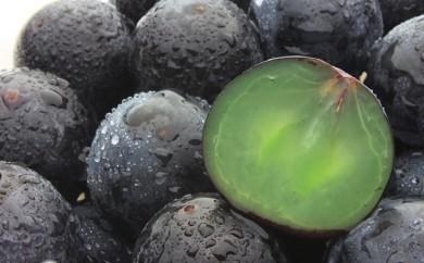 [№5862-0692]【数量限定】30年産フルーツの郷いせはら 種無し巨峰 2kg