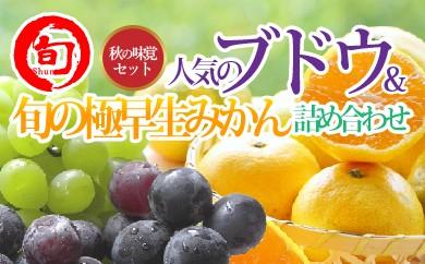 人気のぶどう2種&旬の極早生みかん詰め合わせセット 【旬の味覚市場】