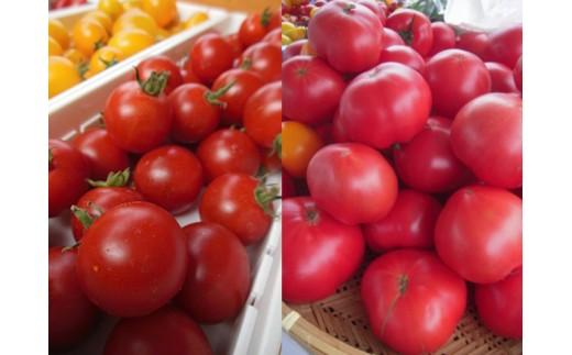 [A30-070]古村農園のトマト詰め合わせ(9月発送)