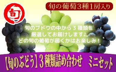 【旬のぶどう】3種類詰め合わせミニセット 【旬の味覚市場】