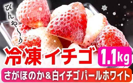 SF001 冷凍イチゴ[こおりいちご](パールホワイト&さがほのか)1.1kg