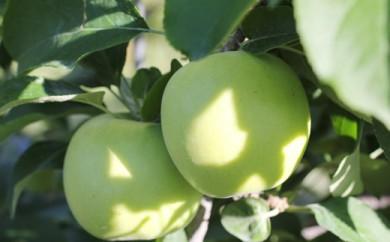 りんご(ゴールド) 約5kg 秀