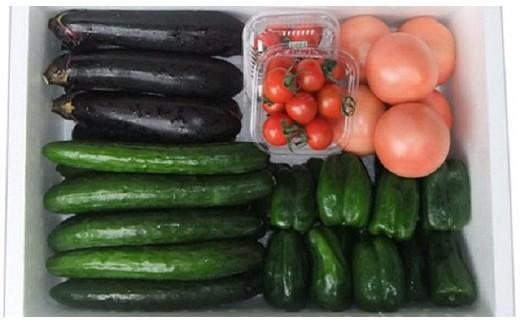 C-8 高冷地野菜の詰め合わせ(7~9月限定)