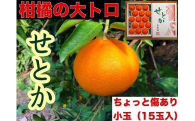 【先行受付・限定5箱】ちょっと傷あり『柑橘の大トロ』 ハウスせとか15玉入