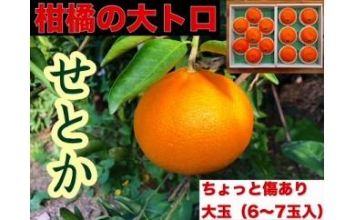 【先行受付・限定5箱】ちょっと傷あり『柑橘の大トロ』 ハウスせとか大玉6~7玉入