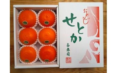 【先行受付・限定20箱】ハーフ化粧箱『柑橘の大トロ』ハウスせとか厳選6玉入