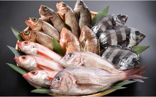 [C011] 日本海・鮮魚特盛