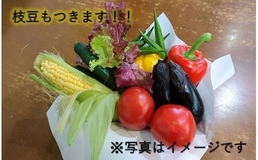 126 味わい枝豆と夏野菜セット