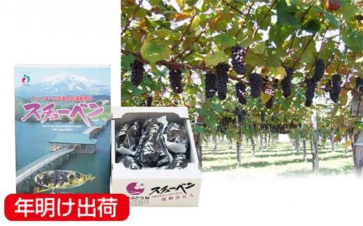[№5554-0003]【年明】鶴田町産 スチューベンぶどう約2kg